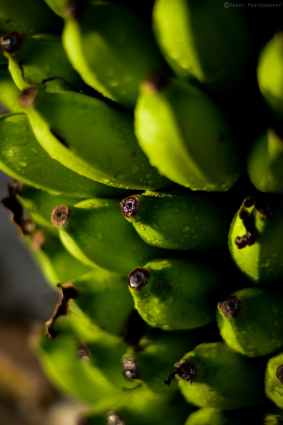 shallow focus photography of unripe bananas