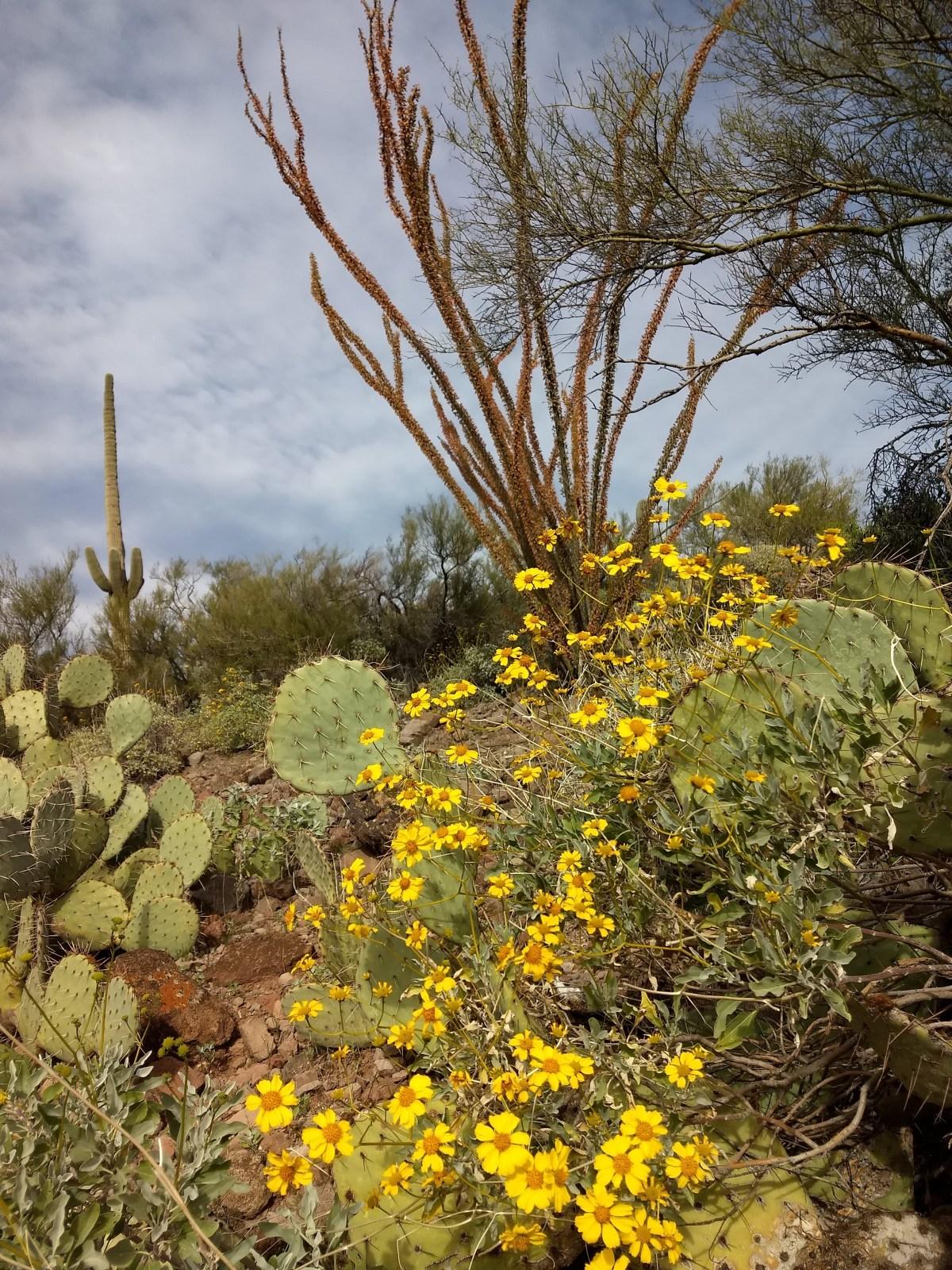 Desert Abundance- aParable